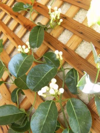 Biljke koje cvetaju zimi  Uredjenje stana