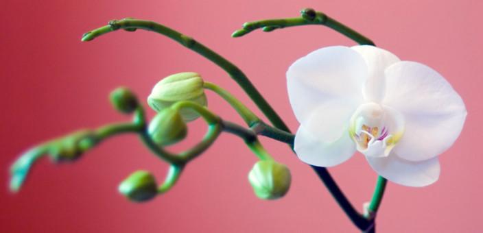 Feng šui – Biljke kao simbol rasta i sreće (1. deo)