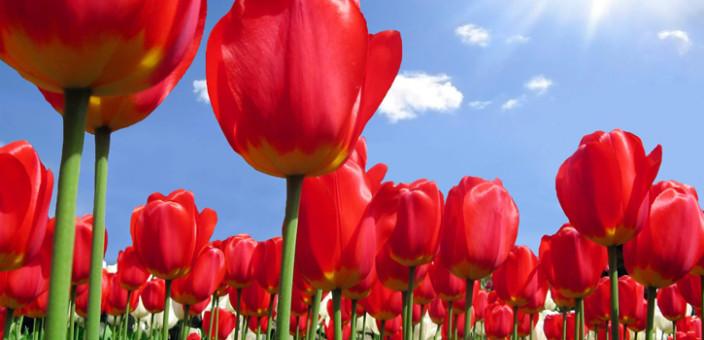 Feng šui – Biljke kao simbol rasta i sreće (2. deo)