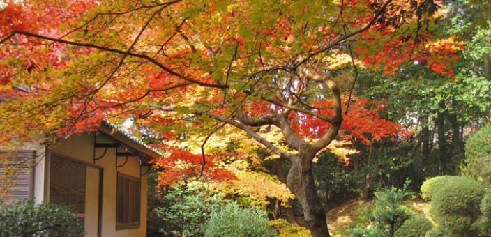 Feng šui – Radujte se, jesen je tu!
